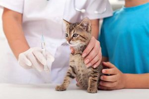 Columbus Small Animal Hospital Kitten Care