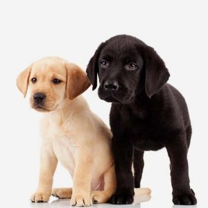 Columbus Small Animal Hospital Puppy Care
