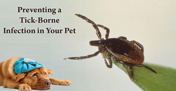 Preventing Tick Infection