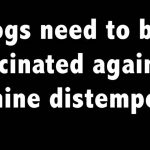dogs need to be vaccinated againbst canine distemper.
