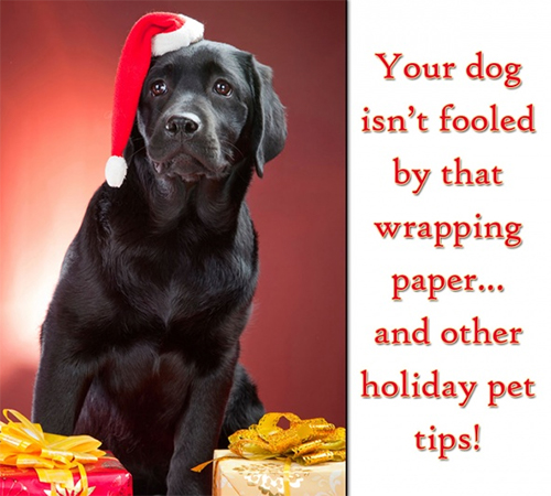 Christmas Pet Safety